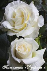 ISLE OF WHITE (Айл оф Уайт)