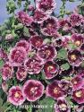 """Шток-роза  """"Creme de Cassis"""" (Alcea rosea)"""