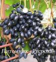 "Виноград ""Надежда АЗОС"""